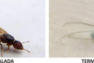 Problemas de ¿Hormigas o Termitas?